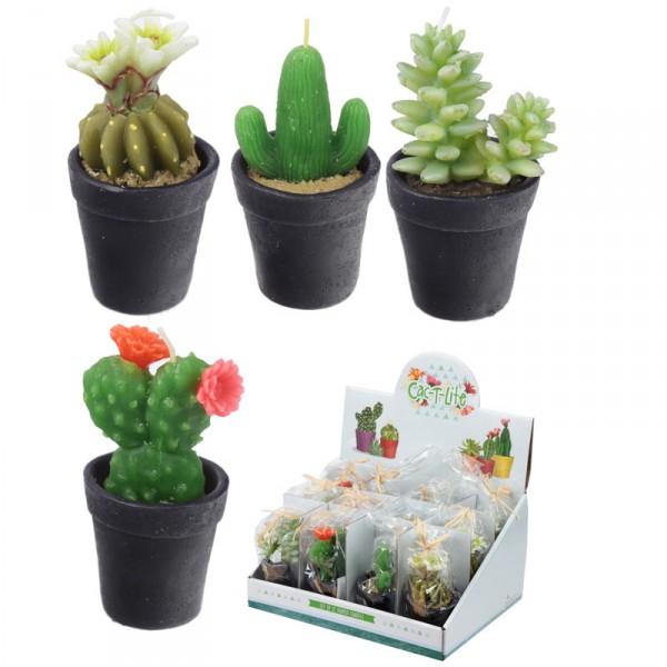 Kaktuskerze in Topf
